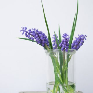 purple flowers in a glass jar