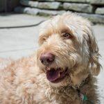 baxter the dog sunbathing