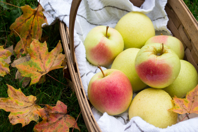 basket of apples and colored leaves