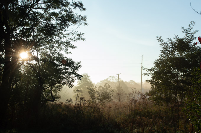 fog behind trees early morning