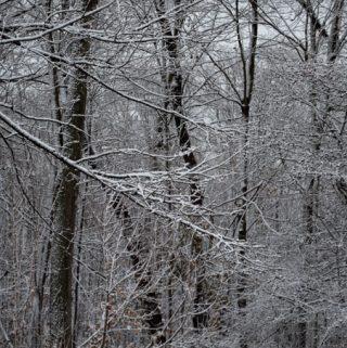 snows after a fresh snowfall