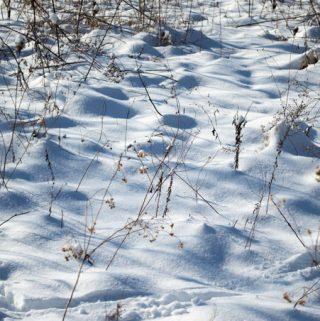 snowy land