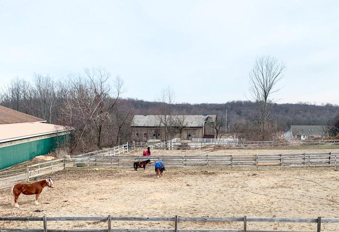 horses outside in February
