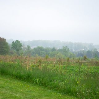 fog in the meadow