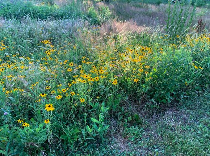 field of ohio wildflowers